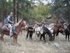 horse-packing-out-elk