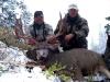mule-deer-buck